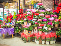 Flower shop in Japan market Royalty Free Stock Photography