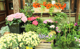 Flower shop. Outdoors in Riga, Latvia Royalty Free Stock Images