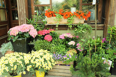 Flower shop. Outdoors in Riga, Latvia Stock Images