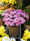 Flower at shop. Flower shops in the market Stock Photography