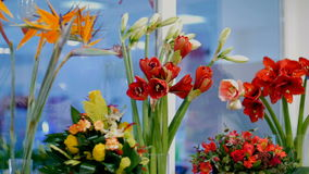 Flower shop, on the show-window there are a lot of bouquets of flowers from pion-shaped roses, Amaryllis ferrari, floral. Stylish compositions with different stock video