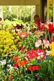 Flower shop in spring. Flower shop with lots of beautiful flowers in spring Stock Image