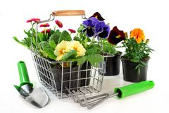 Flower Shopping. A shopping basket with different balcony plants Royalty Free Stock Photography