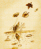 Flower on the shore. Near the stream, falling leaves royalty free illustration