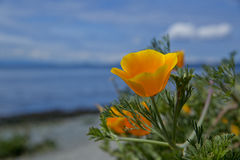 Flower on shore Royalty Free Stock Photos