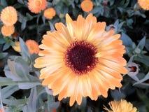 Flower. Shot taken in daylight Stock Photography