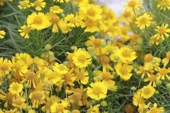 a flower show at hong kong 2014 stock photography