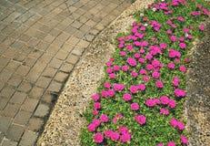 Flower on sidewalk royalty free stock images