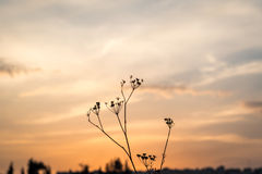 Flower silhouette at sunset Stock Image