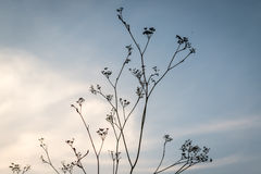Flower silhouette at sunset Stock Photography