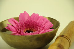 Flower in a singing bowl Stock Images