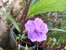 Flower. Single purple flower in a garden Stock Photos