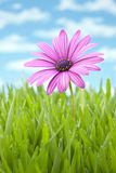 Flower. A single flower surrounded by grass Stock Images