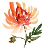 Flower sketch vector illustration