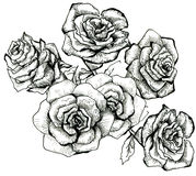Flower sketch bouquet Royalty Free Stock Photo