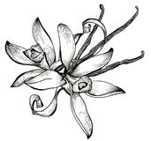 Flower sketch bouquet Royalty Free Stock Photography