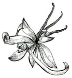 Flower sketch bouquet Royalty Free Stock Images