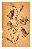 Flower sketch on old paper. Background Royalty Free Stock Photos