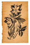 Flower sketch on old paper. Background Stock Images