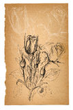 Flower sketch on old paper sheet Stock Photo