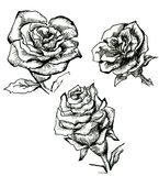 Flower sketch set Royalty Free Stock Photos