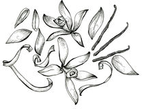 Flower sketch set Royalty Free Stock Photo