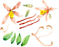 Flower sketch watercolor set Royalty Free Stock Photos