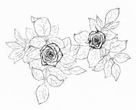 Flower sketch on white Royalty Free Stock Image
