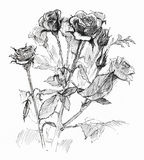 Flower sketch on white Stock Images