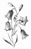 Flower sketch on white Royalty Free Stock Photos