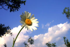 Flower and sky. In sunny day Stock Photo