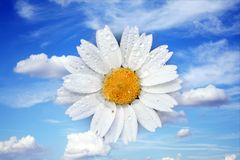Flower in the sky Stock Photography