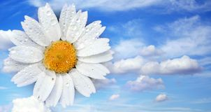 Flower in the sky Royalty Free Stock Photography