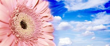 Flower in the sky Royalty Free Stock Images
