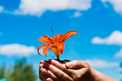 Flower in the sky. Lily in his hand on the sky background Royalty Free Stock Photos