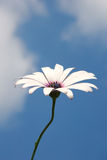 Flower on the sky Stock Images