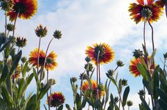Flower and sky royalty free stock photos
