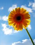 Flower and sky Stock Photos