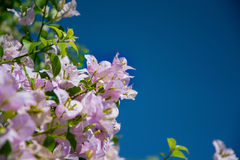 Flower and sky Royalty Free Stock Image