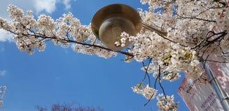 Flower, Sky, Branch, Blossom stock image
