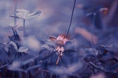 Flower, Sky, Branch, Blossom stock photo