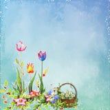Flower, Sky, Flowering Plant, Flora royalty free stock image