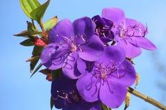 Flower, Sky, High Stock Photography