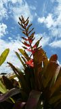 Flower. Sky leaf tree view Stock Image