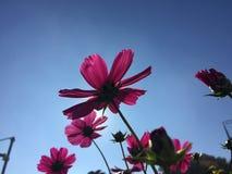 Flower, Sky, Pink, Flora stock image