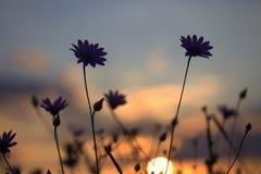 Flower, Sky, Purple, Wildflower Royalty Free Stock Photo