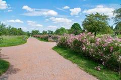 Flower, Sky, Vegetation, Plant
