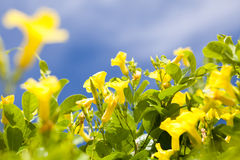 Flower with sky Royalty Free Stock Image