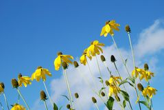 Flower, Sky, Yellow, Flora royalty free stock photography