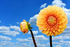 Flower, Sky, Yellow, Flowering Plant Stock Photo